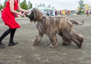 Miljoona Koira 2022 tarjoaa mielenkiintoista katseltavaa ja seurattavaa koko perheelle.