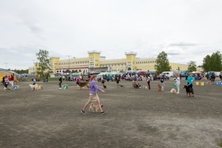 Suosittu kaikkien rotujen näyttely Miljoona Koira järjestetään Kyläkaupalla jälleen kesällä 2021.